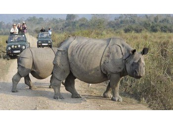 rhino safari in Kaziranga National Park