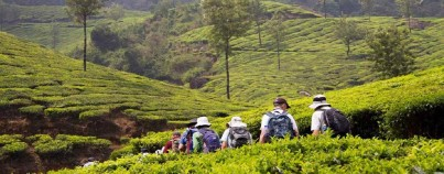 Walks & Hikes in Plantations & Hill Stations of South India